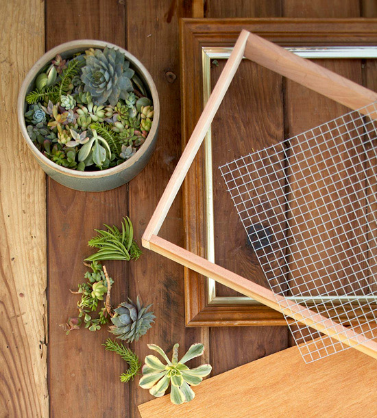 How To DIY Make Framed Living Succulent Art