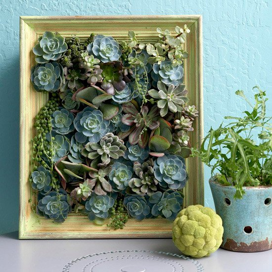 Succulent-Picture-Frame-10