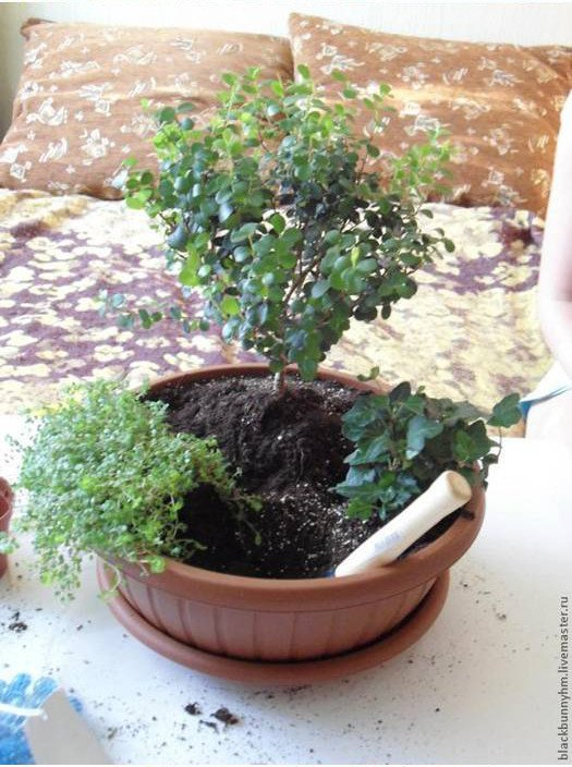 conte de mini-jardin-00-08
