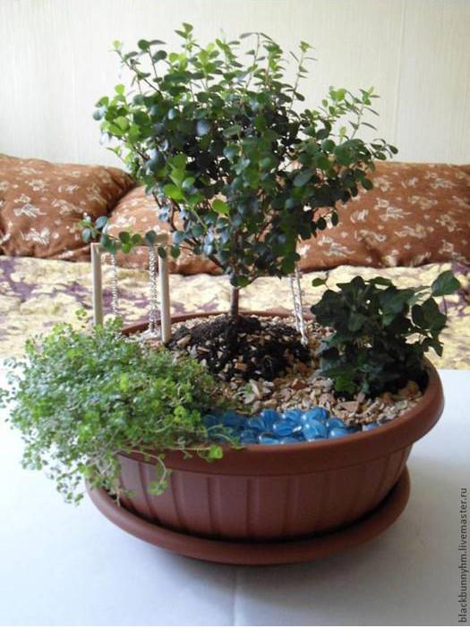 conte de mini-jardin-00-12
