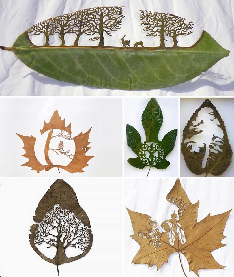 extraordinary-leaf-artwork-by-lorenzo-duran-7