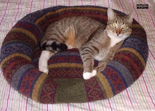 Recycle a Sweater into a Pet Bed