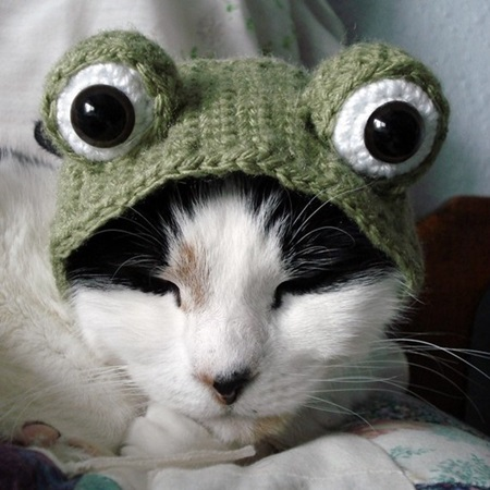 crochet pattern frog pet hat