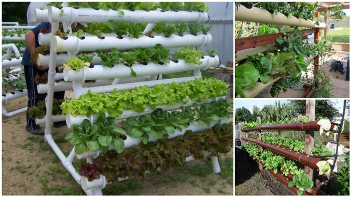 DIY Hydroponic Garden Tower Using PVC Pipes