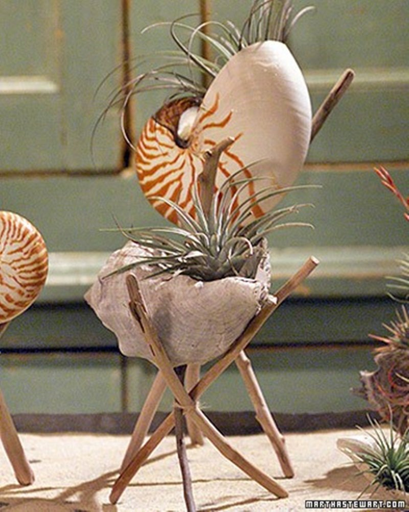 Adorable Seashell Craft Ideas planter