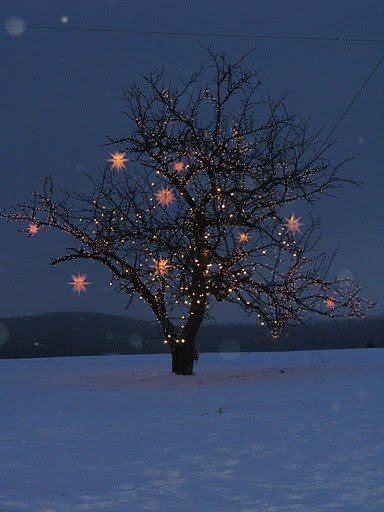dress up trees with moravian stars