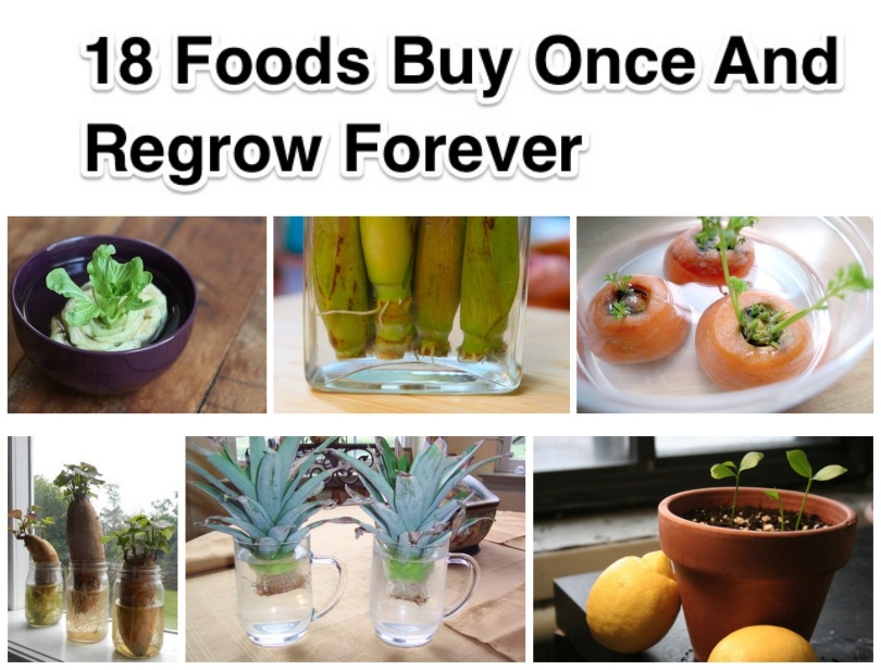 18 Foods Buy Once And Regrow Forever