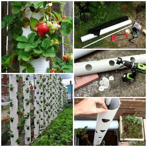 DIY PVC Strawberry Planter Tower # DIY #PVC #Strawberry #Planter #Tower