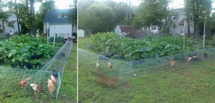 Как построить поделки дворе курица тоннеля