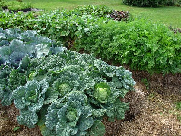 DIY Straw Bale Gardening-An Easy Way To Grow Plant