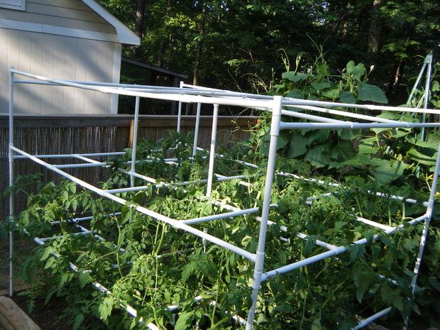 DIY PVC Tomato Cage #DIY #PVC # tomato #cage
