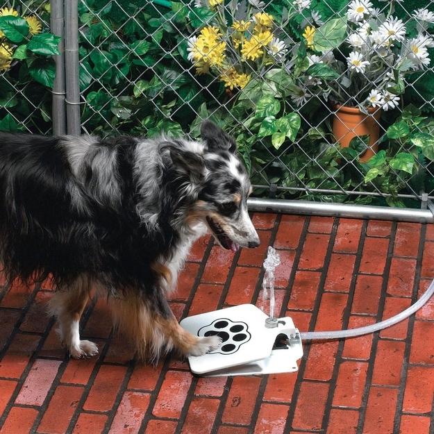 Dog Pet Water Fountain