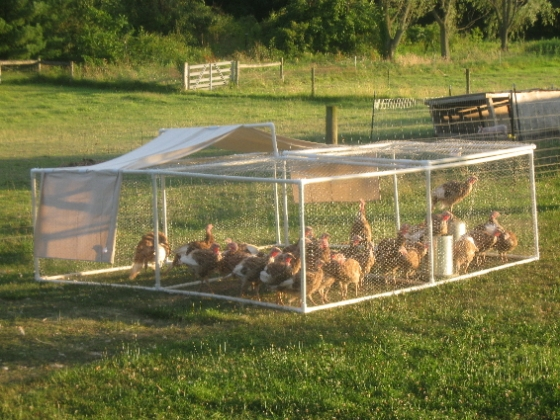 PVC Turkey/Chicken Pen #DIY #PVC #Turkey #Chicken #Pen