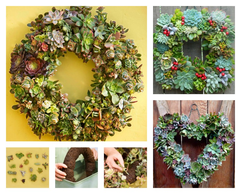 Genial How To Make A Living Succulent Wreath #Succulent #Wreath