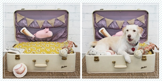 Adorable Diy Pet Bed Ideas Diy Suitcase Dog Bed Cool Creativities