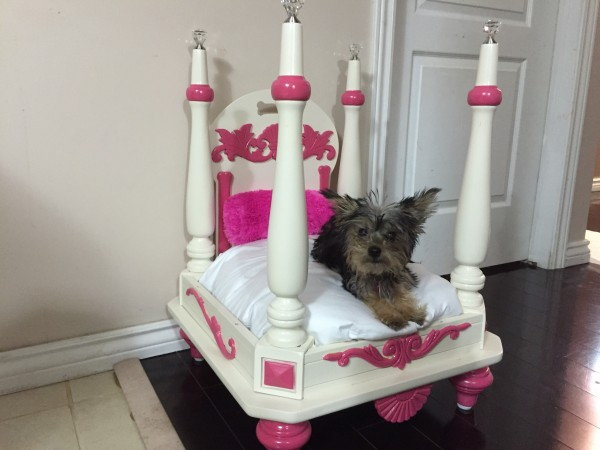 Attirant Adorable DIY Pet Bed Ideas Turn Old, Unused Table Into Pet Bed