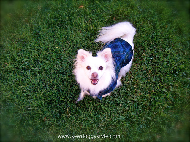 DIY Pet coat pattern #Recycle #Pet