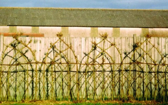 20-Beautiful-Examples-Of-Living-Willow-Fences-16