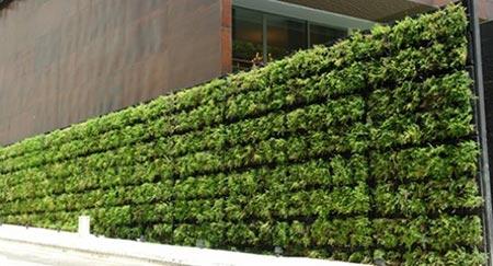 Green-wall-ideas-windshield-terrace