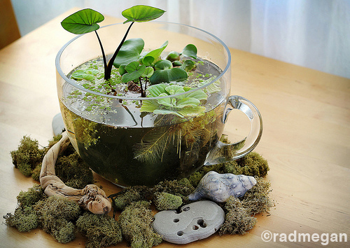 Indoor Teacup Water Garden