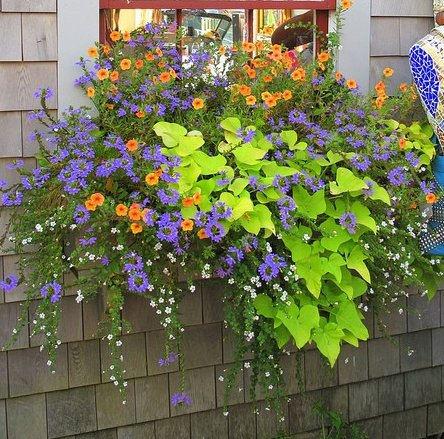 8 Beautiful Window Box Planter Ideas