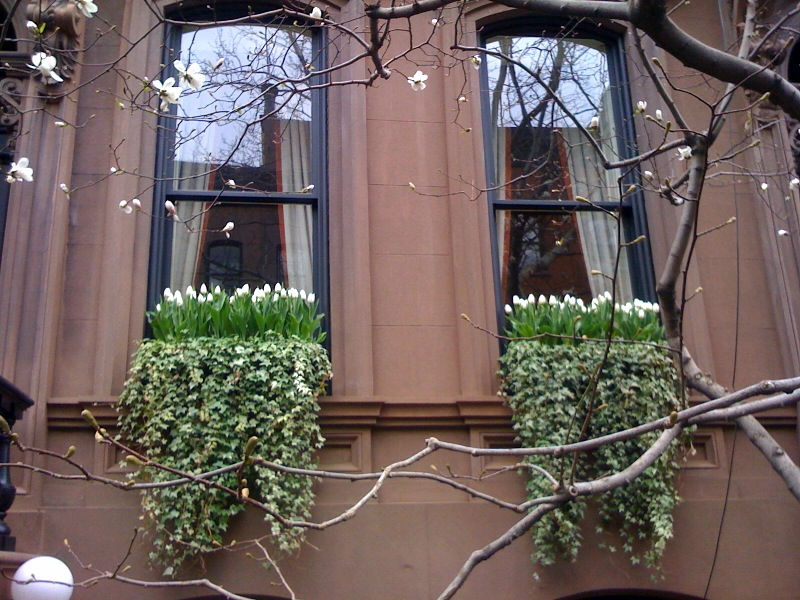 Combined up growing with hanging plants window box
