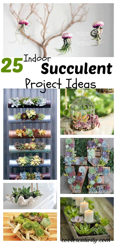 25 Indoor Succulent DIY Project Ideas