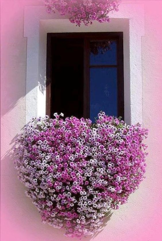 8 beautiful window box planter ideas page 2 of 2 - Winter flowers for balcony ...