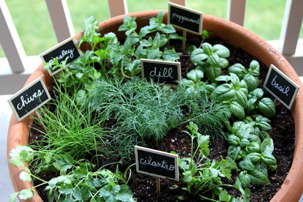 Indoor Herb Garden Ideas One Pot