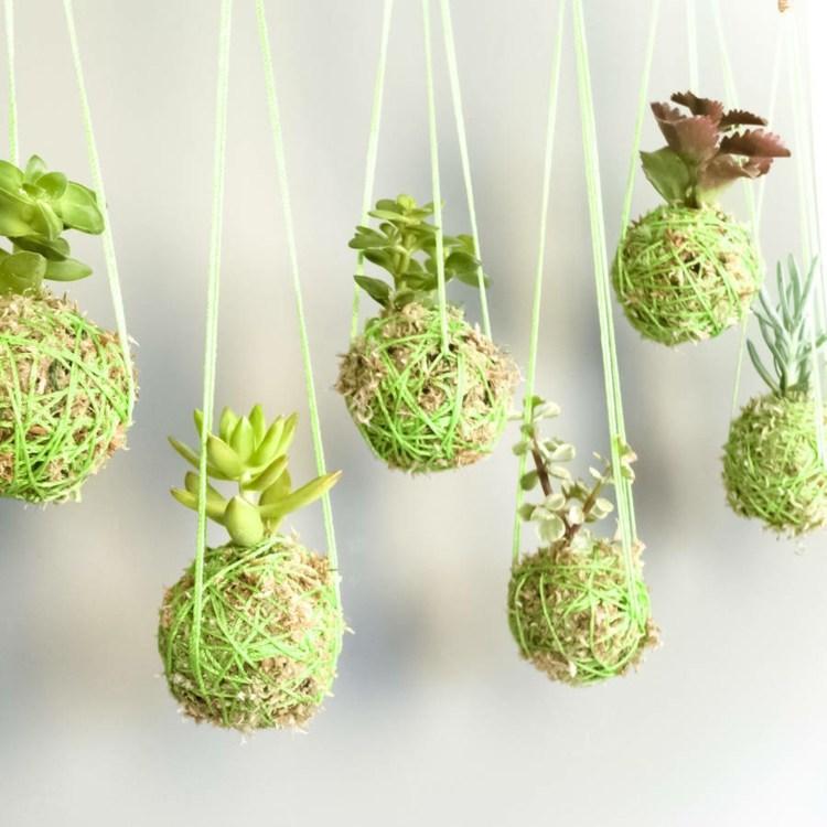 Succulent String Garden