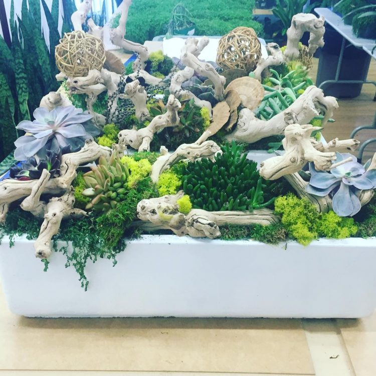 Driftwood-makes-a-great-company-to-succulents-750x750
