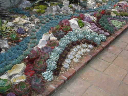 Succulent Garden Ideas 33 500x375 Cool Creativities