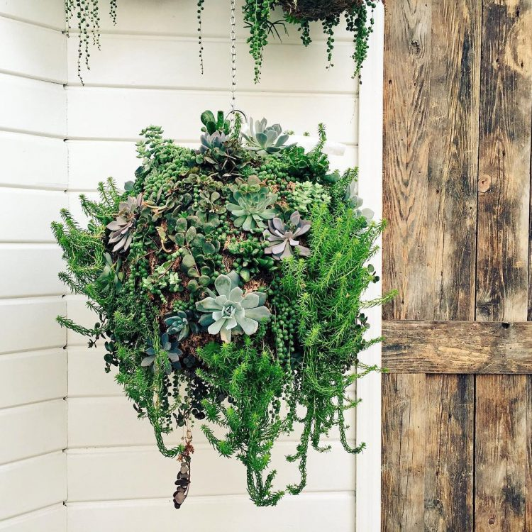 This-is-how-a-gorgeous-hanging-succulent-garden-looks-like