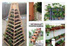grow vertical strawberry garden
