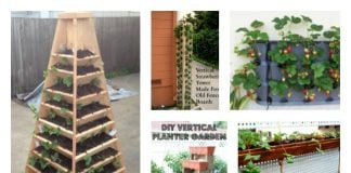 grow vertical strawberry garden