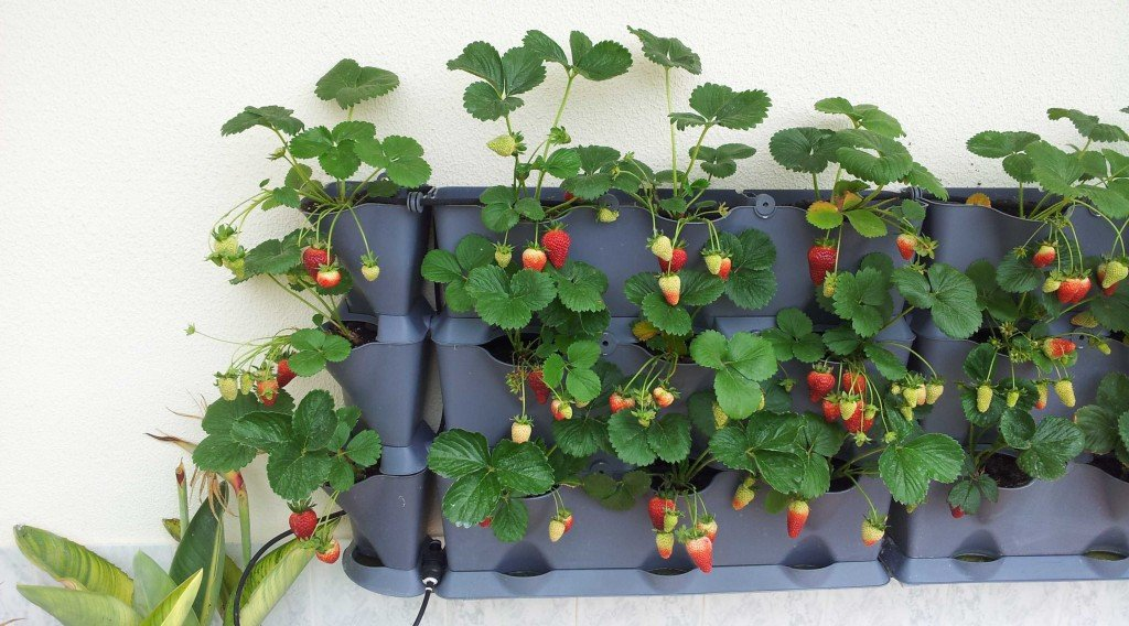 how to build a strawberry garden
