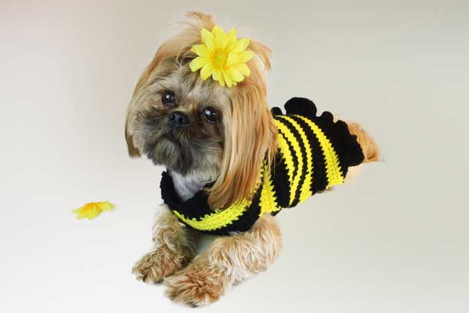 Bumble Bee Dog Sweater Free Crochet Pattern