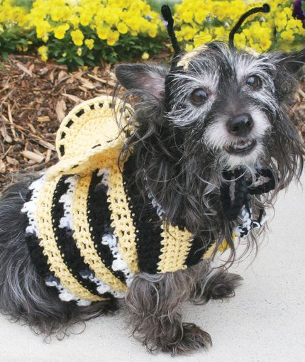 Dog's Crochet Bumble Bee Costume Free Pattern