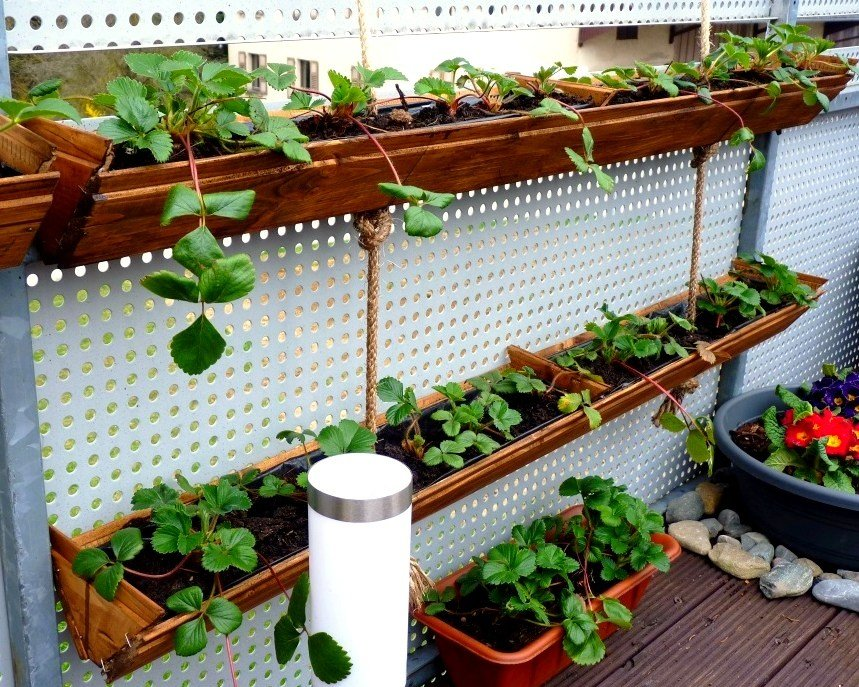 Grow vertical strawberry garden in 10 diy ways for Strawberry garden designs