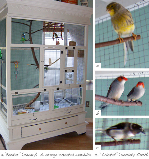 DIY Aviary from Old Armoire