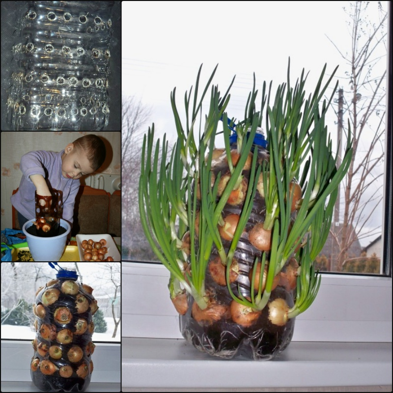 DIY Vertical Onion Tower Palnter out of Plastic Bottle