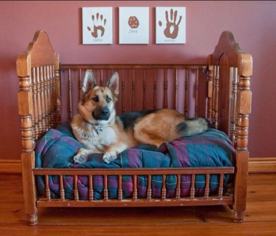 Turn a Crib into a Dog Bed