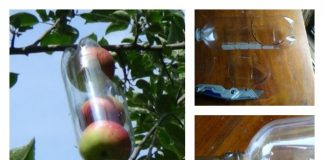 DIY Soda Bottle Apple Picker