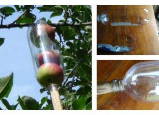 DIY Soda Bottle Apple Picker