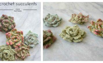 Succulents Free Crochet Pattern