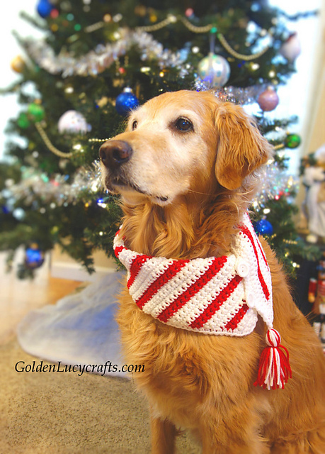 Christmas Dog Scarf Free Crochet Pattern