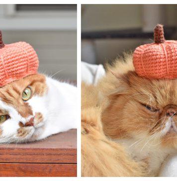 Pumpkin Hat For Pets Free Crochet Pattern